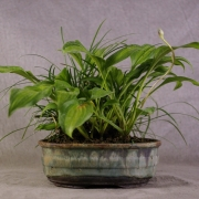 er118---hosta-&-friends-erin-pottery-00